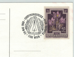 Kuhschelle Küchenschelle 1150 Wien 1968 Flugpost Concorde - 1961-70 Briefe U. Dokumente