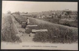 88 - XERTIGNY - La Faisanderie - Un Sentier D'élevage ( Chasse ) Animée  - édit. Nancéenne - CPA Neuve - Xertigny