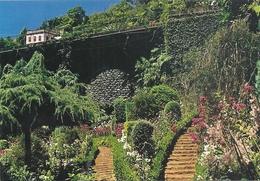 MONTE - MADEIRA . JARDIN . CARTE NON ECRITE - Madeira