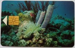 Bonaire 60 Units Coral Reefs - Antilles (Neérlandaises)