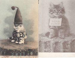 Cat Dunce Born Blind 2x Antique Cats Postcard S - Katten
