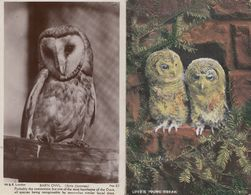 Barn Owl Loves Young Dream 2x Old Owls Postcard S - Oiseaux