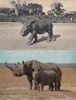Mombasa Baby Rhinoceros Antique & Mother & Child 2x Postcard S - Animali