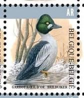 BELGIUM, 2020, MNH, BIRDS,COMMON GLODENEYE, AR, 1v - Uccelli