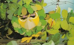 Sage In The Herbs Childrens BBC TV Show Postcard - Séries TV