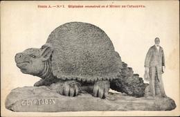 Cp Barcelona Katalonien, Gliptodon Reconstruit En El Museu De Catalunya, Glyptodon - Autres