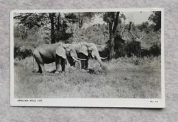 "Cartolina Fotografica ""African Wild Life"" (elefanti) Dall'Uganda Per Treviso 1964 - Fotografía"