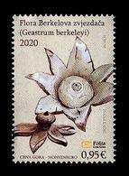 Montenegro 2020 Mih. 446 Flora. Mushrooms. Berkeley's Earthstar MNH ** - Montenegro