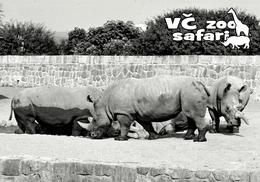 ZOO Dvur Kralove, CZ - Northern White Rhinoceros (Ceratotherium Simum Cottoni) - Tchéquie