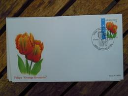 OCB Nr 3786 Buzin  Tulp Tulipa    Flora Flower Bloem   ( Class Gris Box ) Stempel Petit Rechain - FDC