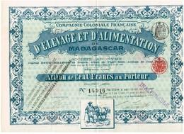 Titre Ancien - Compagnie Coloniale Française D'Elevage Et D'Alimentation De Madagascar -Titre De 1897 - Déco - Rare - - Afrique