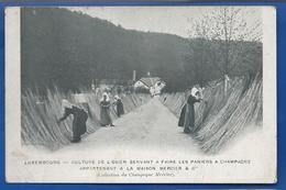 LUXEMBOURG   Culture De L'Osier  Servant A Faire Des Paniers A Champagne    Animées - Ansichtskarten