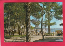 Modern Post Card Of Palma Nova,Mallorca,Islas Baleares,Spain,A66. - Mallorca