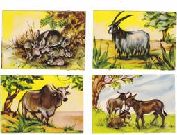 9 Chromos - Découpis Animaux - 4 Scans - Animals