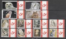 HIBOUX & CHOUETTES - Owls