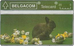 Belgien L & G Phonecard Eastern Kaninchen Rabbit - Zonder Chip