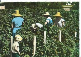 MACHILLY    ( HAUTE-SAVOIE )   LA CUEILLETTE DES FRAMBOISES , DANS LA RÉGION DE MACHILLY - Farmers