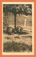 A497 / 363 76 - CLERES Parc Zoologique Agamis - France