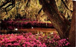 North Carolina Wilmington Airlie Gardens - Wilmington