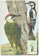 CARTE MAXIMUM PIC VERT OISEAU / BUCAREST 1959 - Maximumkarten (MC)
