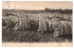 CPA Afrique Du Nord - Scènes Et Types - 6164. La Grande Prière Au Désert (2e Phase) - LL - Postcards