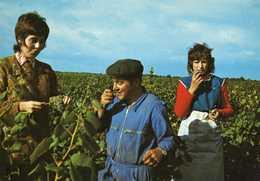 LES VENDANGES AU PAYS NANTAIS - Vines