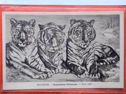 CPA.Exposition Coloniale De Paris 1931.Trois Tigres .   (D1.261) - Tentoonstellingen