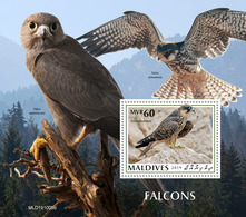 Maldives 2019 Fauna  Falcons  S202002 - Maldives (1965-...)