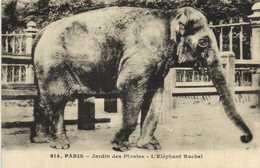 PARIS  Jardin Des Plantes L'Elephant Rachel RV - Parcs, Jardins