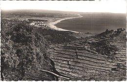 FR66 ARGELES SUR MER - Sept 16943 - Vue Gérald - Vignes En Terrasse - Belle - Argeles Sur Mer