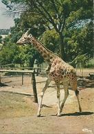 OZOIR LA FERRIERE Parck Zoologique D Attilly - Sonstige Gemeinden