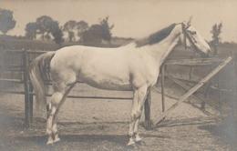 Cheval - Horses