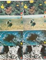 Turkey, TR-TT-N-0100 - 0107, Set Of 8 Cards,  Endangered Species, Frog, Leopard, Bustard, Seal, 2 Scans.  NB : 107 Bend - Turchia