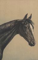 Tête De Cheval - Horses
