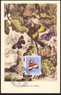 1952/1953 Eichenspinner Auf Maximum Karte. Stempel Cademario Casa Di Cura. - Pro Juventute