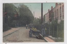 Watermael-Boitsfort. Avenue Van Becelaere. - Watermael-Boitsfort - Watermaal-Bosvoorde