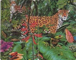 Netherland - Chip - TK Puzzle 2 Cards - Jungle & Leopard & Frog - Niederlande