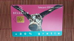 Phonecard Dog Used - België