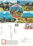 Wildlife Of Africa. Tanzania. Viaggiata - Tanzania