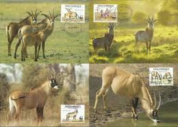 Mozambique 2010 Mi 3658-3661  Max Card ( MAX ZS6 MZB3658-3661 ) - Wild