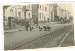 Mondorf-les -Bains,Sept 1947 (Les Moutons)Original Photo 16/12 - Bad Mondorf
