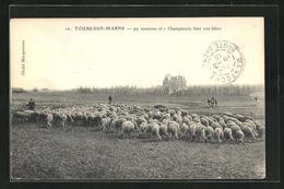 CPA Tours-sur-Marne, 99 Moutons Et 1 Champenois - France