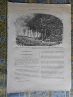 LES MISSIONS 25/01/ 1895 AFRIQUE CONGO ZAIRE LANDANA BELGIQUE STATUE DAMIEN DE VEUSTER MOLOKAI LOUVAIN - Kranten