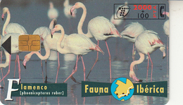 Fauna Ibérica  Flamenco - Spanje