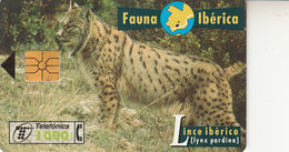 Fauna Ibérica  Lince Ibérico - Spanje
