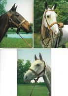CHEVAUX - Lot De 8 Cp - Ed. Yvon N° 1, 5, 10, 11, 12, + En Camargue Crinière Au Vent - Horses