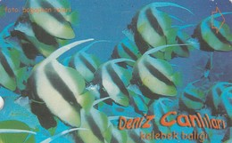 Turkey, TR-TT-N-338A, Kelebek Baligi, Sea Creatures, Fish, 2 Scans. - Turquia
