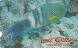 Turkey, TR-TT-N-342B, Temizlikci Baligi, Sea Creatures, Fish, 2 Scans. - Turkey