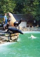 ZOO Duisburg, Germany - Sea Lion, Elephant Seal - Duisburg