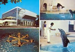 Varna Dolphinarium - Dolphin - Bulgaria